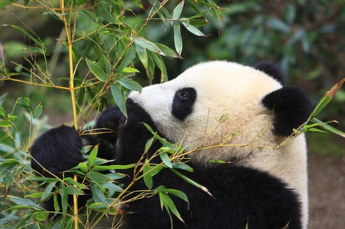 Content & Google Panda
