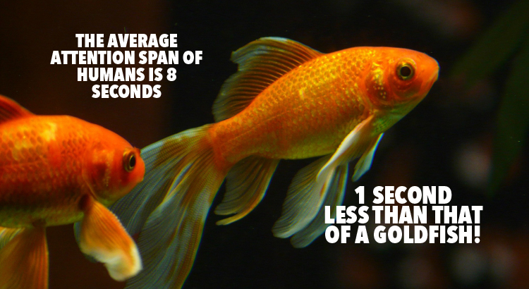 attention-span-fish
